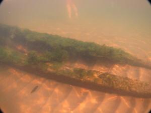 2011-09-01 VermontShoreWreck_013