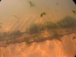 2011-09-01 VermontShoreWreck_010
